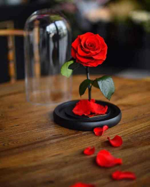 real enchanted rose flowers disney