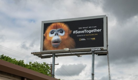 National Geographic Photos Photo Ark Endangered Species Day SaveTogether