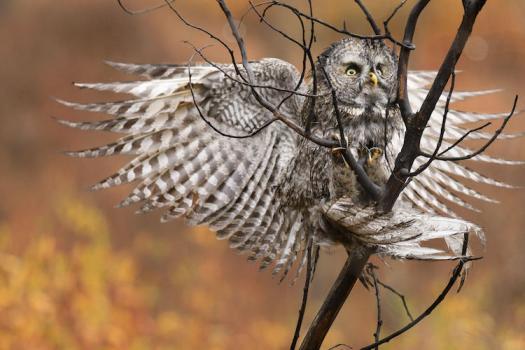 2017 Audubon Photography Awards