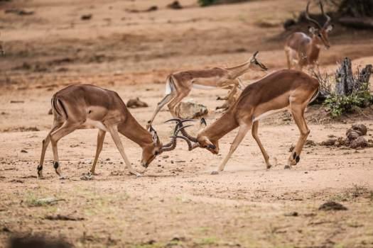 Robert Irwin Wildlife Photography