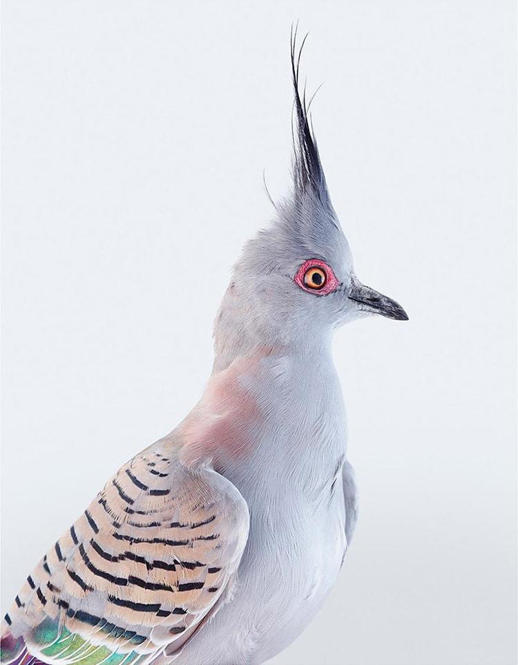 Leila Jeffreys Colorful Bird Portraits