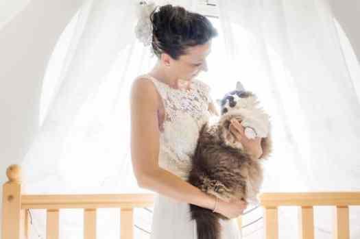 Wedding Photo Ideas by Cats in Wedding Photoshoot Ideas by Marianna Zampieri