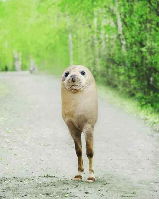 Digital Collage Hybrid Animals by Arne Fredriksen
