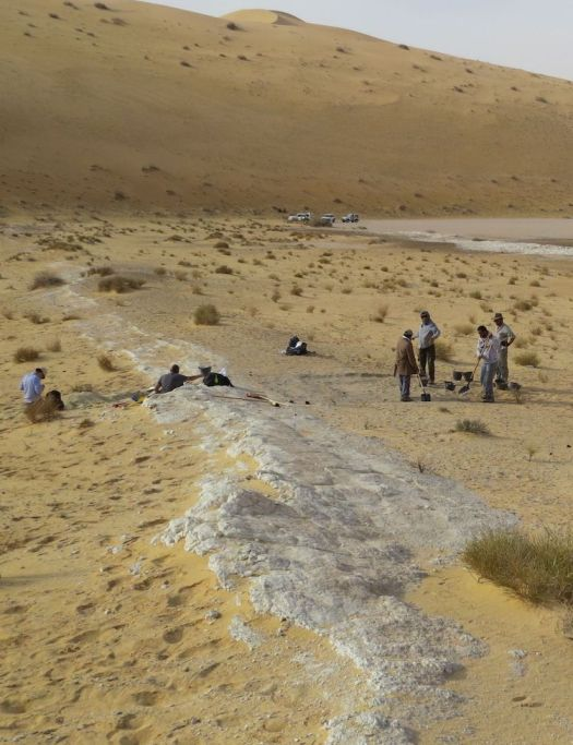 Excavations at the Al Wusta site