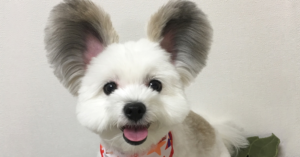 Mouse Dog Goma Mickey