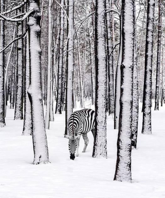 Digital Art by Robert Jahns