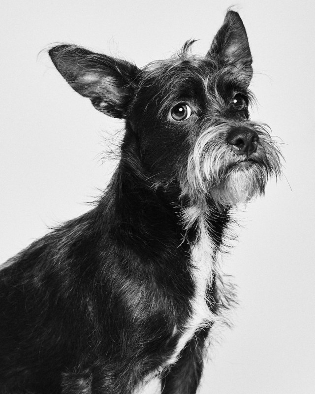 Dogs Portraits Adopt a Pet by Suzanne Donaldson and Shayan Asgharnia