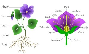 Get Creative and Learn How to Draw a Flower Step by Step
