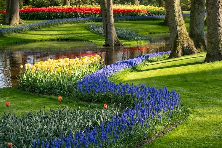 Keukenhof Flower Garden in The Netherlands