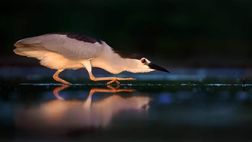 Award Winning Bird Photography