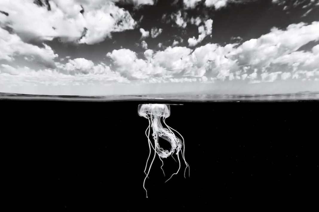 水母的黑白照片