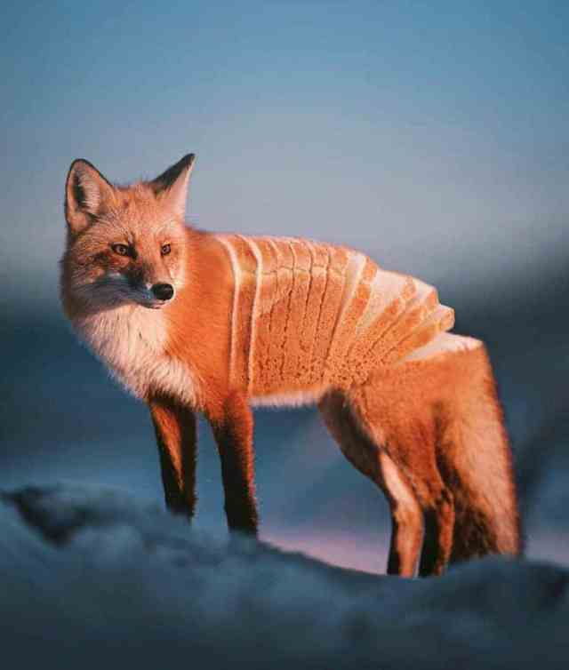 Photo Manipulation Art Animals by Ronald Ong