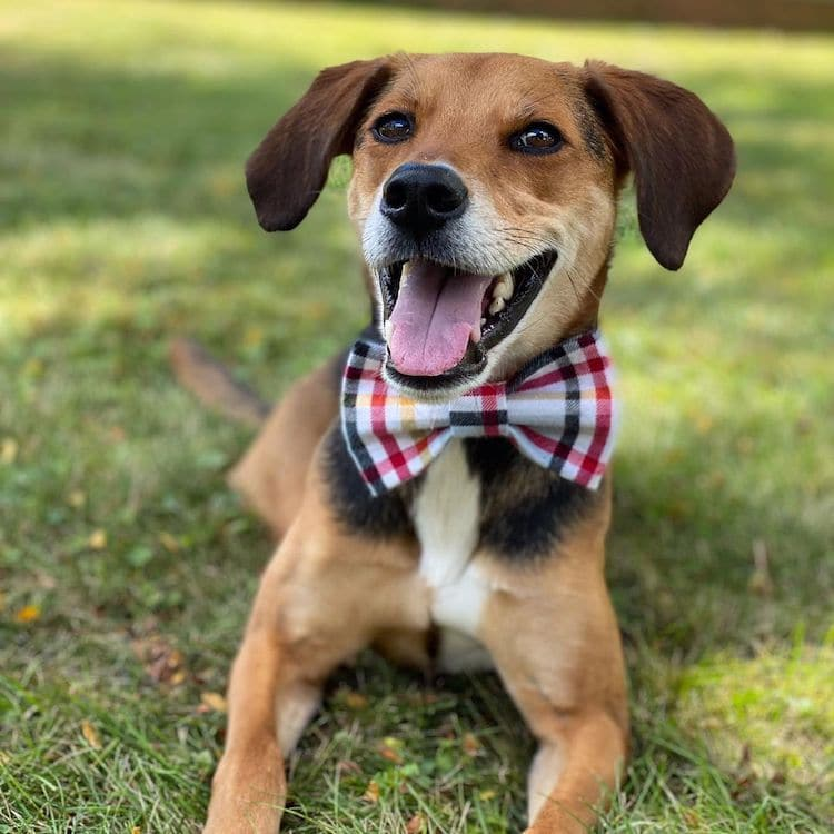 Bow Tie Boone