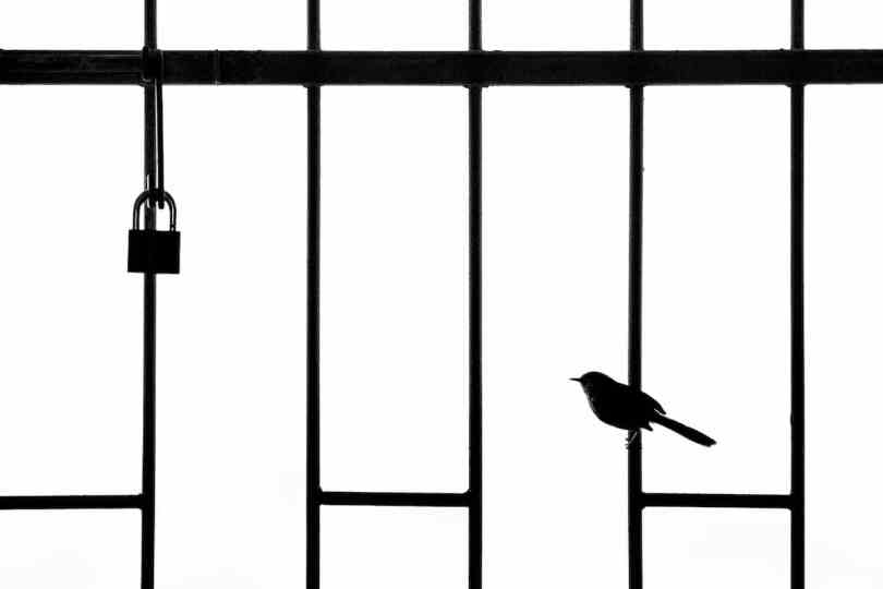 Bird Perched on a Steel Door