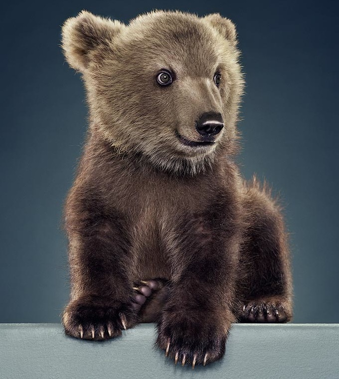 Cute Cuddly Ferocious Bears