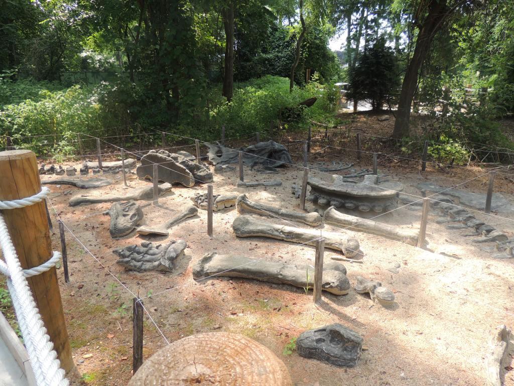 Dinosaur Bones At Dorney Park