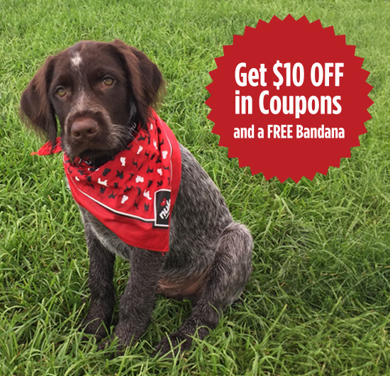 Free Dog Bandana