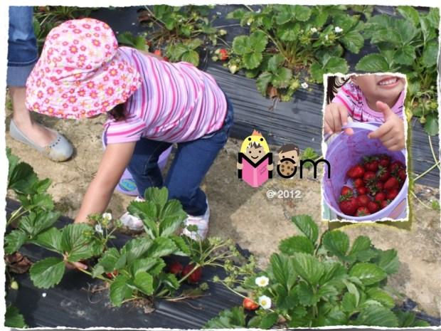 My Mommyology Strawberry Picking
