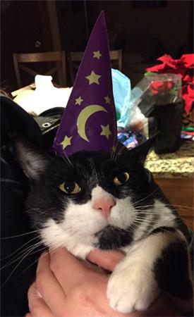 money wizard cat