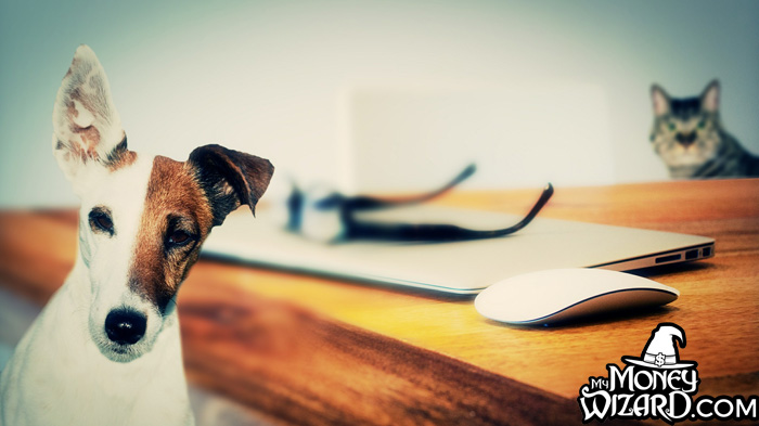 Pet Insurance: Responsible Planning or Total Scam?
