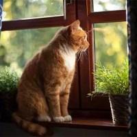 Кошка смотрела в окно