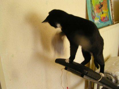 Ja, wat moet ik met die RAT... even schudden dan maar.