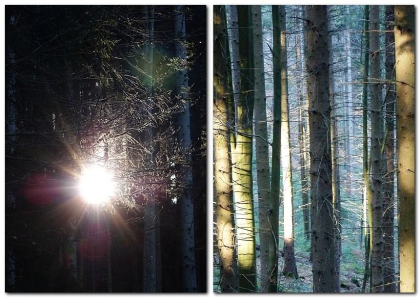10_Wunderschönes_Licht_fällt_durch_den_herbstlichen_Wald