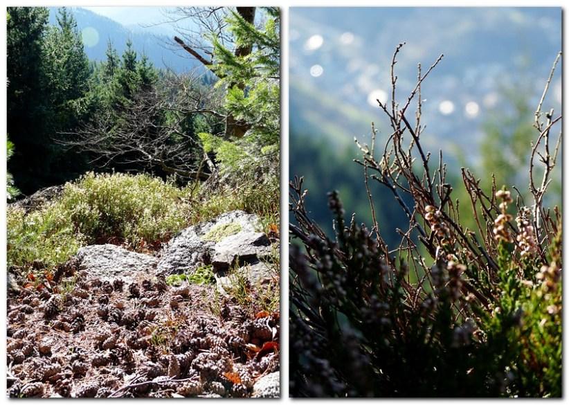 31_Herbstliche_Stimmung_auf_dem_Latschig_im_Schwarzwald