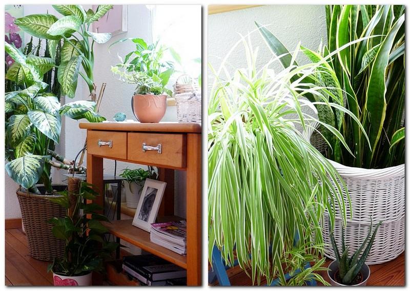 Zimmerpflanzen für ein gesundes Raumklima und gute Luft