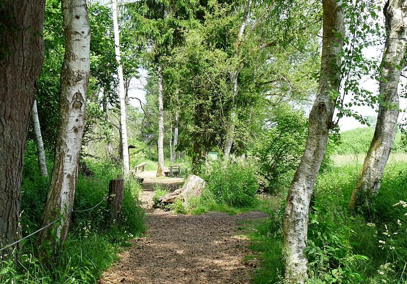 der Weg führt durch den Wackelwald