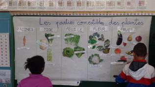 Parties comestibles des plantes