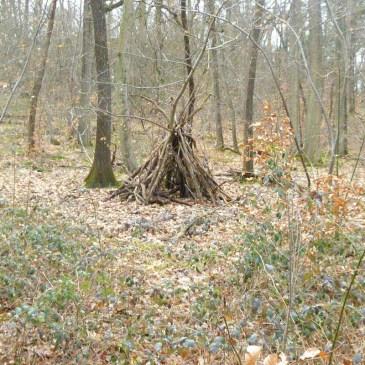 Printemps en forêt – Mooc Botanica