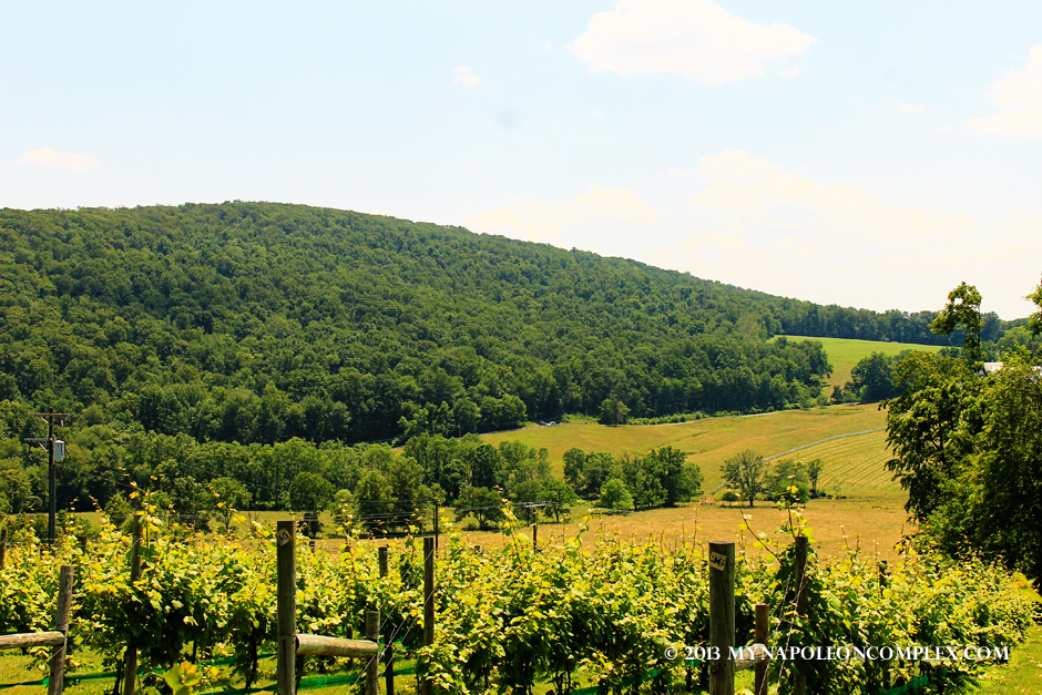 Virginia Wine Country-06