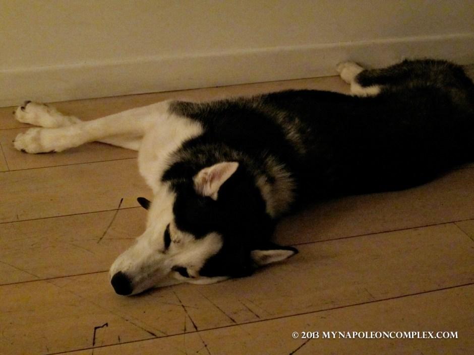 Picture of Husky sleeping