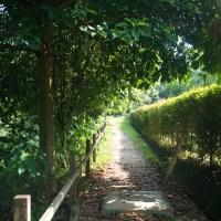 #3 MacRitchie Treetop Walk