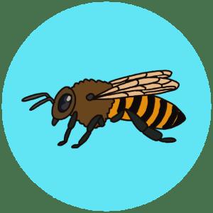 identifying British bees
