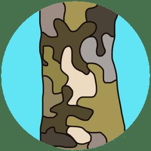 identifying sycamore bark