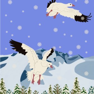 children's book illustration for the snow geese
