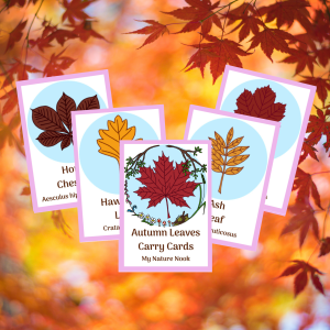 Autumn Leaves ID Cards, nature flashcards