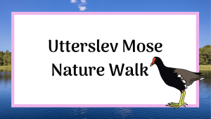 Utterslev Mose nature walk