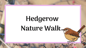 hedgerow nature walk, nature blog