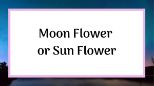 moon flower or sun flower