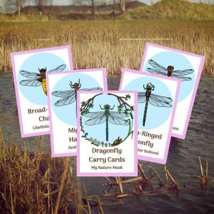 dragonflies ID cards