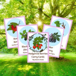 hedgerow berries, flashcards