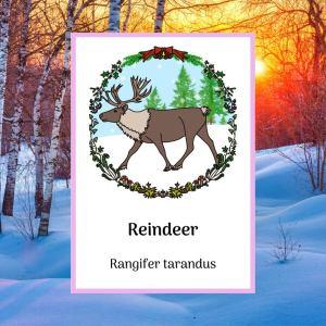 reindeer greetings card