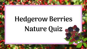 hedgerow berries nature quiz