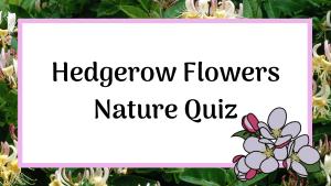 hedgerow flowers nature quiz