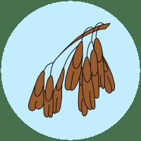 ash keys seeds