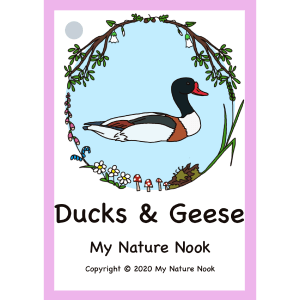 ducks and geese field guide cards