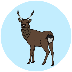 sitka deer, common british deer, wildlife field guides